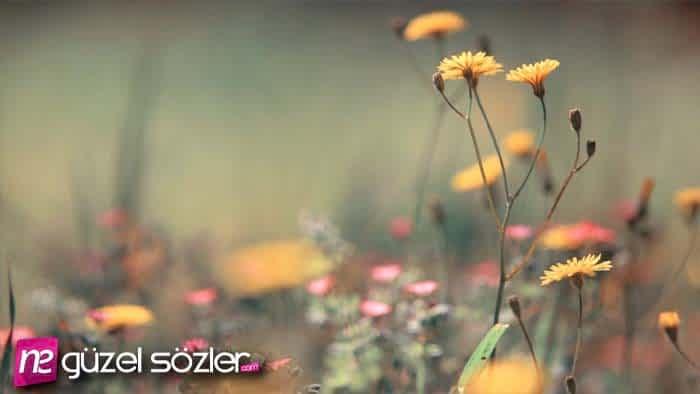 Çiçek Sözleri
