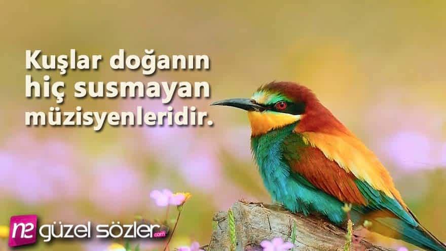 Güvercin Sözleri