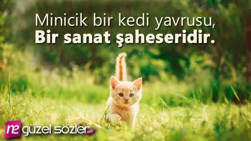 Kediler Hakkında Güzel Sözler
